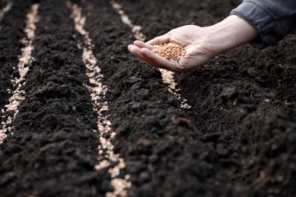 Agriculture _ Sowing seeds
